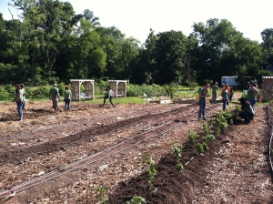 It was a busy summer at the HON Urban Farm!