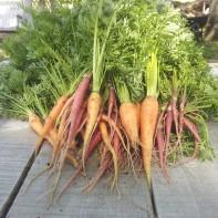 05.21 - Carrots