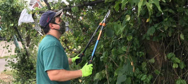 Volunteer Andrew Befante trims tree debris.
